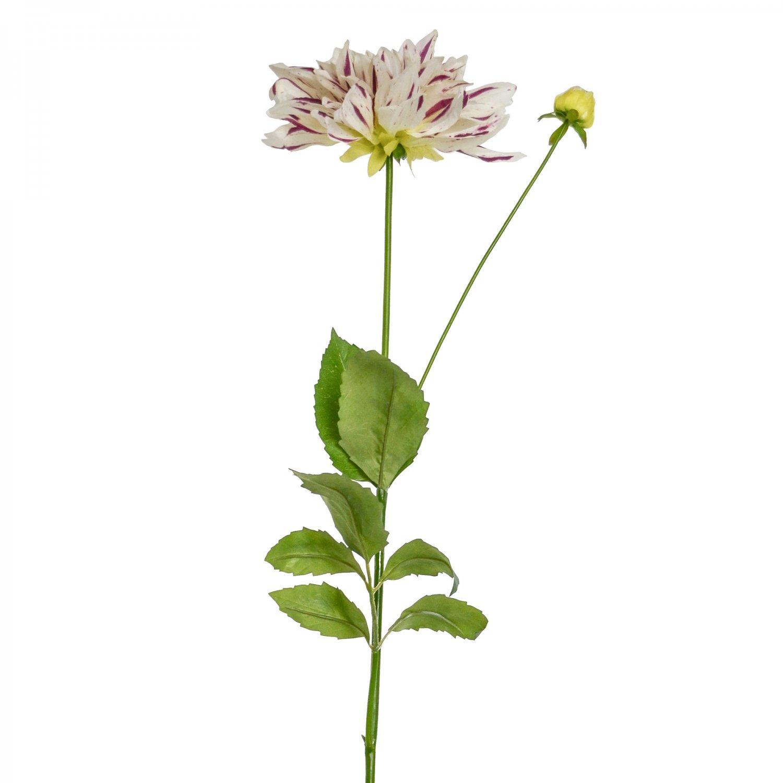 ダリア ホワイト×パープル 単品花材
