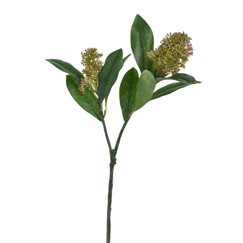 スキミア 単品花材