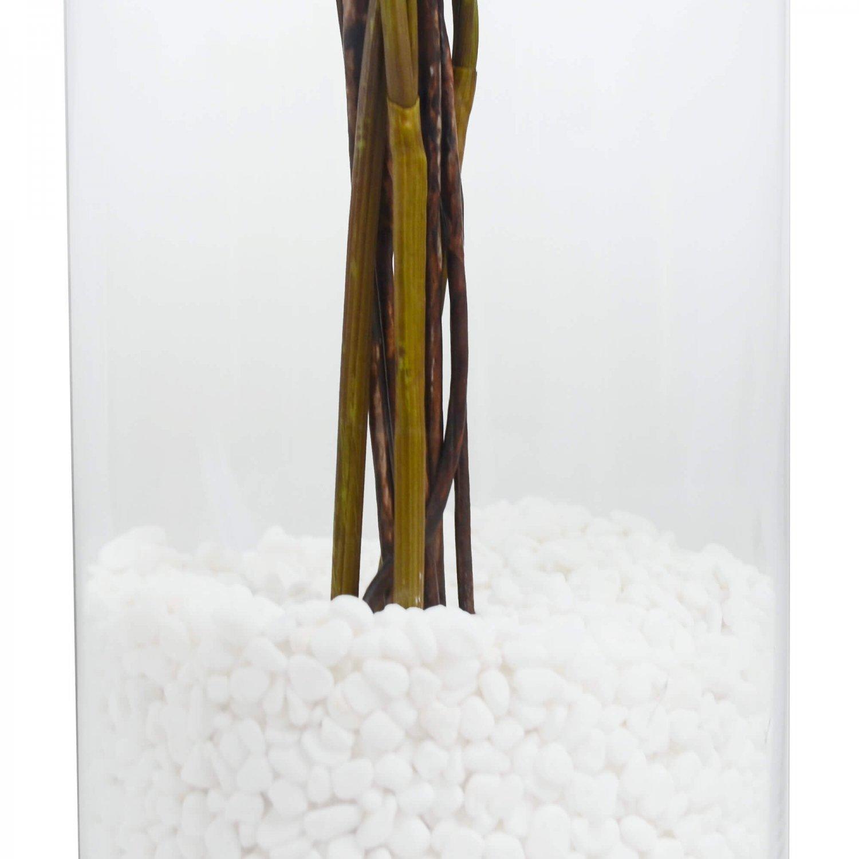 アジアンタム ガラスシリンダーH35