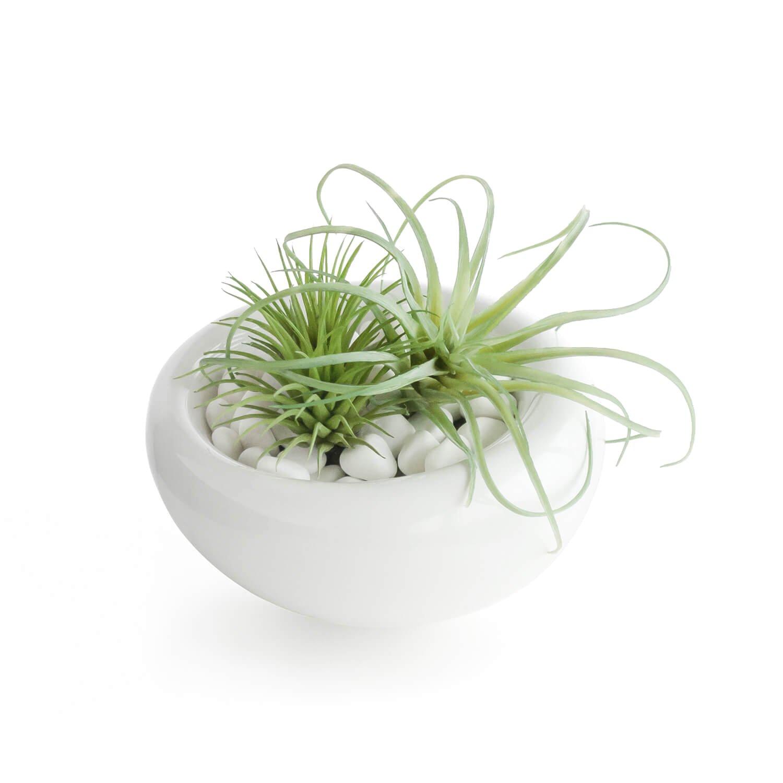 多肉植物ミックスD 白陶器S