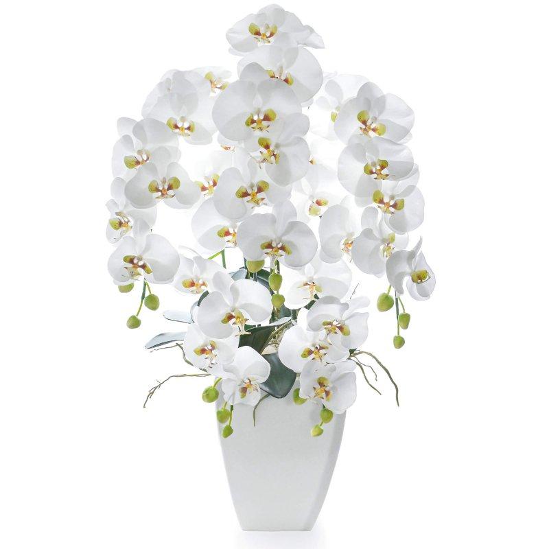 胡蝶蘭 供花 5本立ち