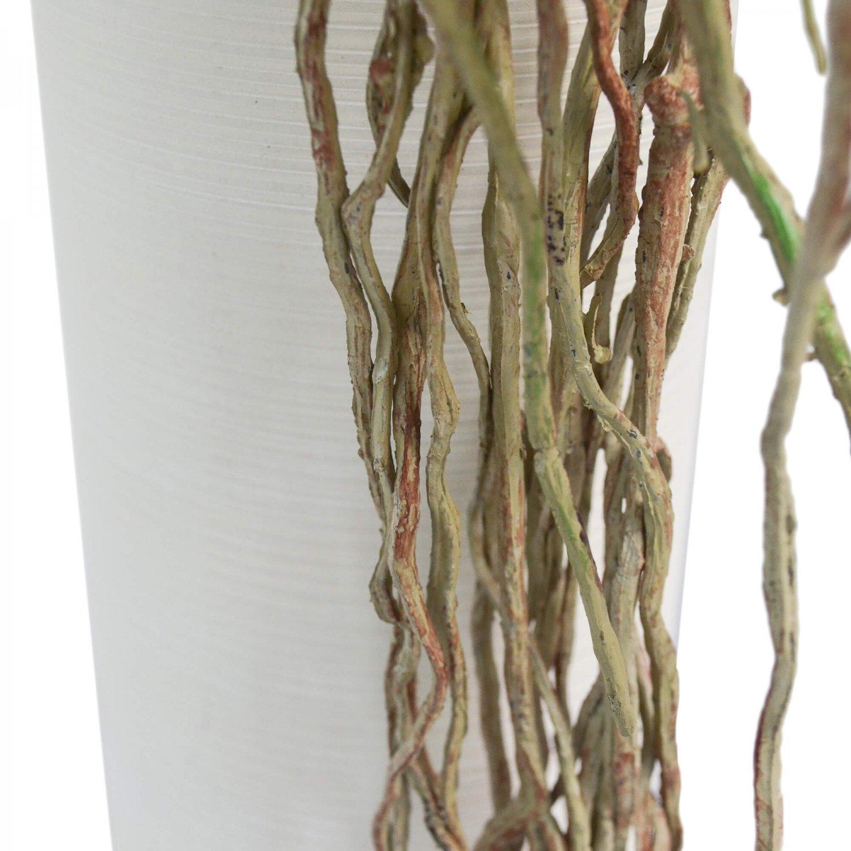 ミニ胡蝶蘭 シリンダー