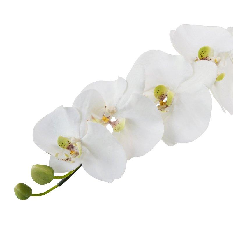 胡蝶蘭L 単品花材