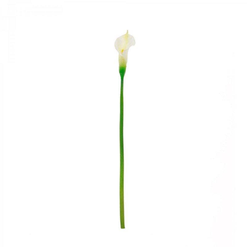 カラーリリィ クリーム 単品花材 H80