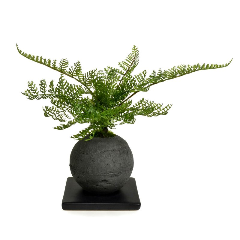 シノブ 檜炭ボール(黒皿) CUPBON 盆栽 フェイクグリーン