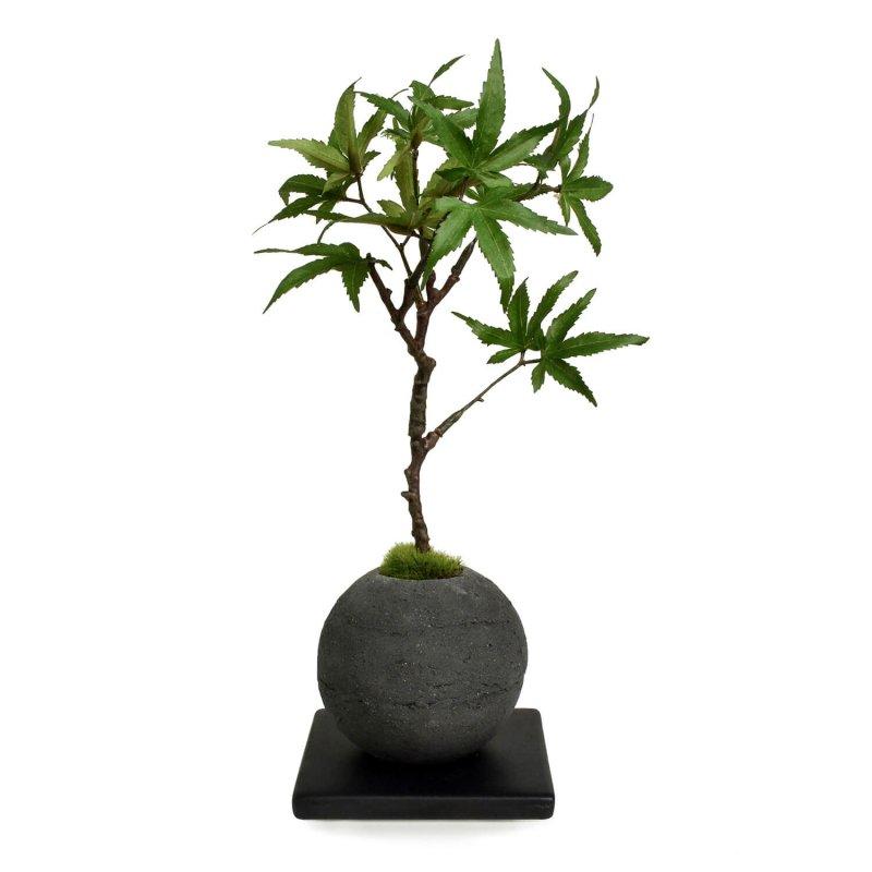 モミジ 檜炭ボール(黒皿) CUPBON 盆栽 フェイクグリーン