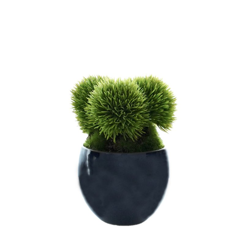 マリモ 小鉢 藍 CUPBON 盆栽 フェイクグリーン