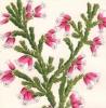 Flore des Serres et des Jardins de l'Europe