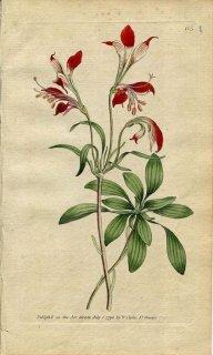 1790年 Curtis Botanical Magazine No.125 ユリズイセン科 アルストロメリア属 ALSTROEMERIA LIGTU