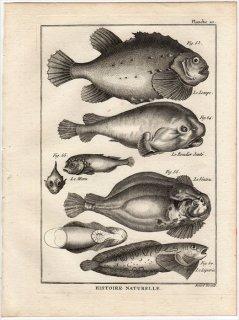 1788年 Bonnaterre 魚類事典 Pl.20 ダンゴウオ科 ヨコヅナダンゴウオ ウバウオ科 ロックサッカー ダンゴウオ科 ホテイウオ クサウオ科 クサウオ 4種
