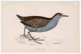 1888年 Morris 英国鳥類史 小型版 クイナ科 ヒメクイナ属 ヒメクイナ BAILLON'S CRAKE