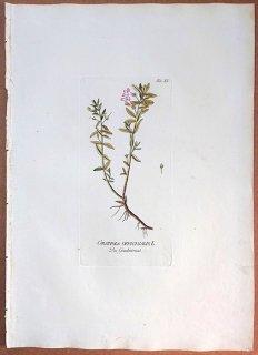 1788年 Plenck Icones Plantarum Medicinalium Tab.15 オオバコ科 オオアブノメ属 GRATIOLA OFFICINALIS
