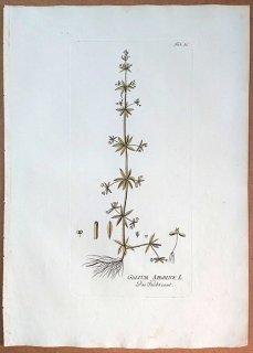 1788年 Plenck Icones Plantarum Medicinalium Tab.56 アカネ科 ヤエムグラ属 シラホシムグラ GALIUM APARINE