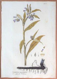 1788年 Plenck Icones Plantarum Medicinalium Tab.76 ムラサキ科 ヒレハリソウ属 ヒレハリソウ SYMPHYTUM OFFICINALE