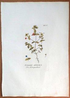 1788年 Plenck Icones Plantarum Medicinalium Tab.82 サクラソウ科 ルリハコベ属 アカバナルリハコベ ANAGALLIS ARVENSIS