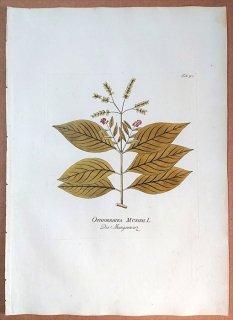 1788年 Plenck Icones Plantarum Medicinalium Tab.90 アカネ科 サツマイナモリ属 OPHIORRHIRA MUNGOS