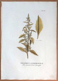 1789年 Plenck Icones Plantarum Medicinalium Tab.166 ヒユ科 アリタソウ属 アメリカアリタソウ CHENOPODIUM ANTHELMINTICUM