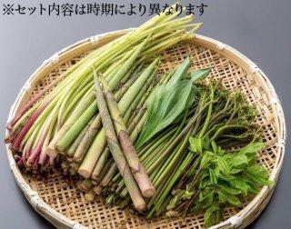 飛騨山菜おまかせセット  1kg