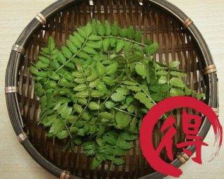 山椒 新芽 / 木の芽  1kg