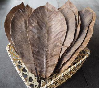 飛騨の天然  乾燥朴葉    10枚