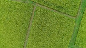 青々と広がる田園の俯瞰空撮