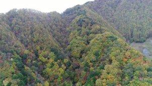 山梨県 夜叉神峠の紅葉 全景へズームアウト