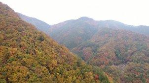 山梨県 夜叉神峠の紅葉 山あいを空撮