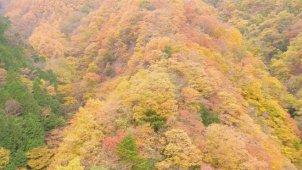 色鮮やかな山間部の紅葉 その1