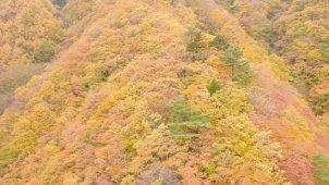 色鮮やかな山間部の紅葉 その2