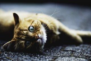 動物病院「徹底節税」シリーズ10 | 倒産防止共済 編