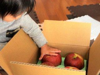 皮ごとガブっとかじれる!美味しいリンゴ(サンふじ10kg 40個入り)受付11月30日中---(*12月初旬より発送開始予定)