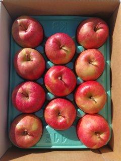 【究極の蜜入りりんご】青森県産 こみつ【送料無料】