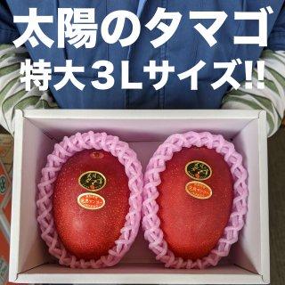 宮崎完熟マンゴー 「太陽のタマゴ」青秀3Lサイズ2玉入