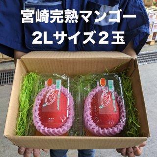宮崎完熟マンゴー2玉