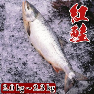 紅鮭 2.0�〜2.3�