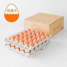 【期間限定】初産み卵(50個)