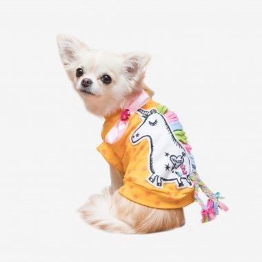 【S*ck Right!(サックライト)】Dotty Pony