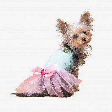 【S*ck Right!(サックライト)】Crystal Ballerina shirt