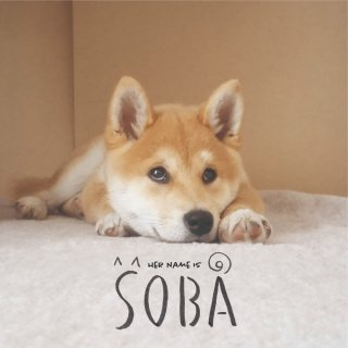 HER NAME IS SOBA