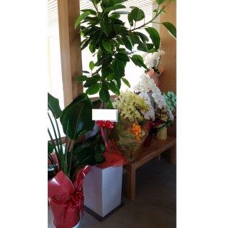 10000円品種おまかせ観葉植物鉢