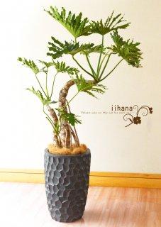 20000円品種おまかせ観葉植物鉢