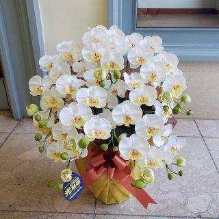 光触媒加工 胡蝶蘭 白黄(ホワイト系) Sサイズ5本立ち 陶器鉢植え 花ギフト