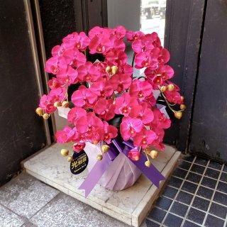 光触媒加工 胡蝶蘭 真紅(レッド系) Sサイズ5本立ち 陶器鉢植え 花ギフト