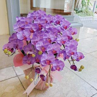 光触媒加工 胡蝶蘭 紫(パープル系) Sサイズ5本立ち 陶器鉢植え 花ギフト