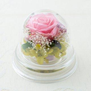 バラのアクリルプチドーム【ピンク】