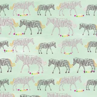 シマウマとリズム  zebra and rhythm