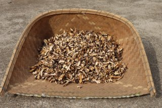 【業務用】原木干し椎茸スライス 1kg 令和元年12月収穫