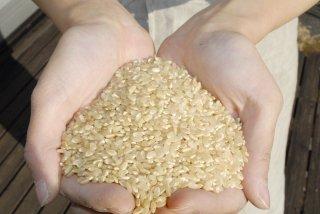 【新米・玄米】自然栽培コシヒカリ (自家採種・熊本県産) 3kg