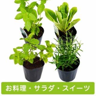 ハーブ 苗 4種 セット / お料理 / サラダ / スイーツ 用