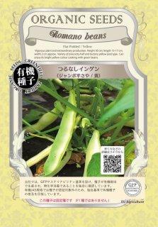 つるなし インゲン / ジャンボ 平さや / 黄 / 有機 種子 固定種 / グリーンフィールド / 豆類 [小袋]
